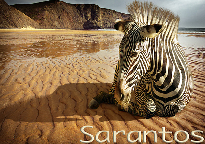 """Sarantos: """"Why Ask Why"""" – uniformly excellent throughout"""