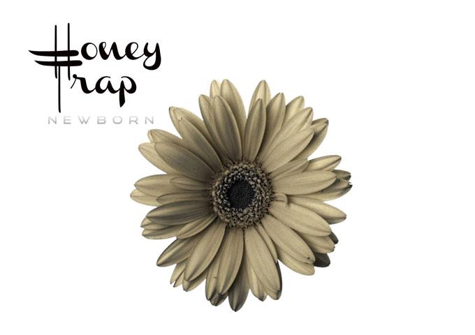 "Newborn: ""Honey Trap"" – something of a perfect alchemy"